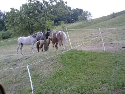 koně s hříbětem
