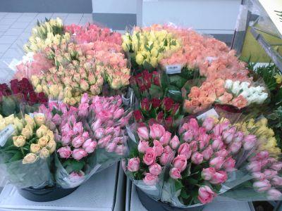 tucet růží