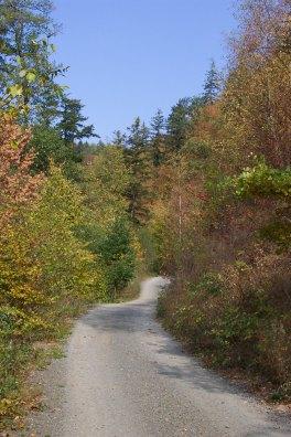 podzimni_cesta