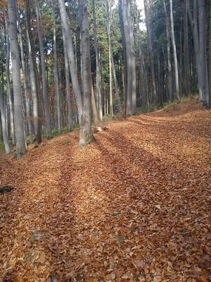 říjnový les I