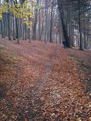 říjnový les II