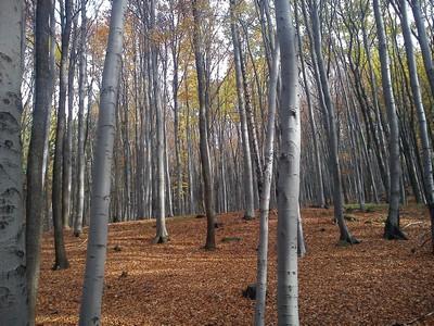 říjnový les III