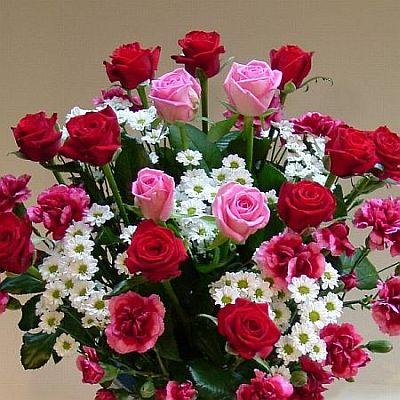 růže pro Mod