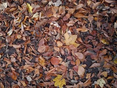 spadané listí I