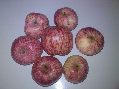 Vincentovy jablka