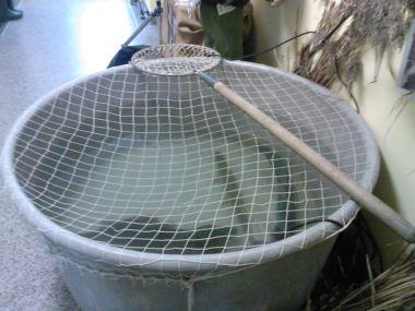 ryby-káď